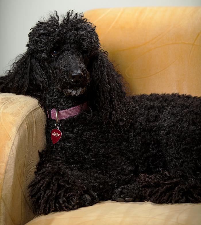 Abby on chair